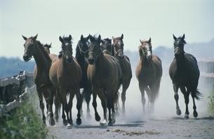 馬の写真素材 [FYI03201175]