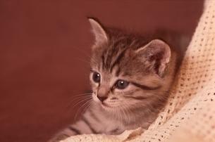 仔猫の写真素材 [FYI03201313]