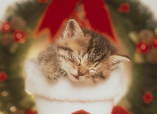 長靴の中で眠る猫とリースの写真素材 [FYI03201334]