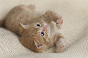 子猫の写真素材 [FYI03201376]