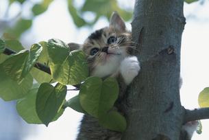 木につかまる子猫の写真素材 [FYI03201392]