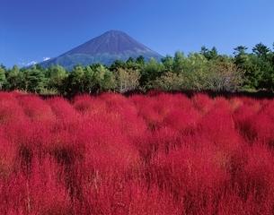 ほうき草の秋と富士山    足和田村 山梨県の写真素材 [FYI03201595]