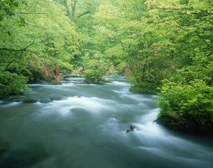 新緑の奥入瀬渓流  青森県の写真素材 [FYI03201606]