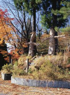 梅集落入り口のワラ人形の写真素材 [FYI03201704]