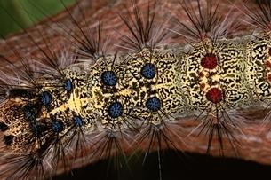 蛾の幼虫 6月の写真素材 [FYI03201842]