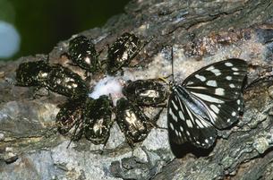 樹液を吸う昆虫の写真素材 [FYI03201941]