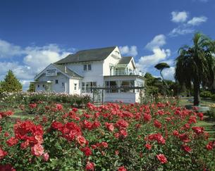 バラと白い家 オークランド ニュージーランドの写真素材 [FYI03202058]