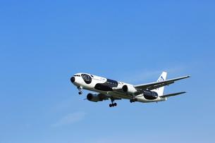 ジェット機 ANA  パンダ塗装の写真素材 [FYI03202666]