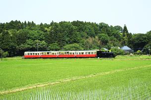 小湊鉄道,トロッコ列車の写真素材 [FYI03202947]
