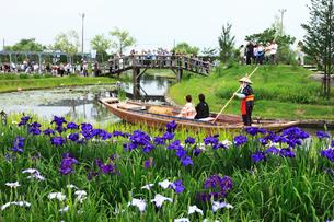 佐原水生植物,花嫁舟の写真素材 [FYI03202981]