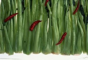 野沢菜漬の写真素材 [FYI03203354]