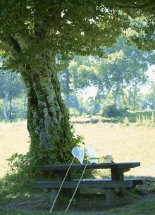 大樹の木陰にある虫かごと網の写真素材 [FYI03203356]
