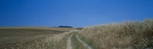 マテーラの田園と道    イタリアの写真素材 [FYI03203509]