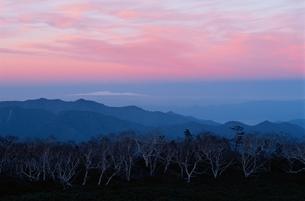 夕暮れのダケカンバ林 10月 乗鞍岳 長野県の写真素材 [FYI03203668]