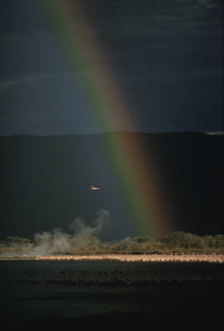 フラミンゴの群れと虹 ボゴリア湖国立公園 ケニアの写真素材 [FYI03203840]