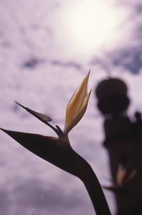 花と城の写真素材 [FYI03204111]