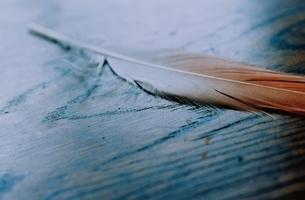 フラミンゴの羽の写真素材 [FYI03204556]