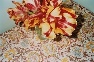花瓶に差されたチューリップの写真素材 [FYI03204586]