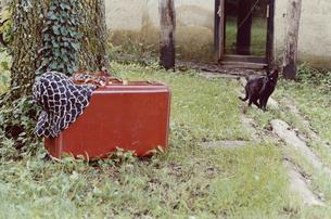 黒猫と庭に置かれた旅行鞄と帽子の写真素材 [FYI03204611]