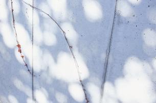壁に伸びる蔓の写真素材 [FYI03204690]