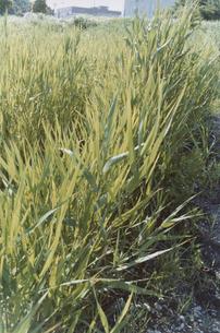 草むらと砂利の写真素材 [FYI03204696]