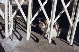 のら猫の写真素材 [FYI03204701]