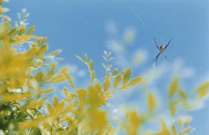 青空と蜘蛛の写真素材 [FYI03204723]