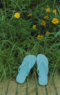 花壇の端の青いビーチサンダルの写真素材 [FYI03204804]
