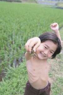 ザリガニをつかむ日本人の男の子の写真素材 [FYI03205159]