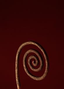 アブストラクトオブジェの写真素材 [FYI03206034]