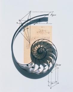 オウム貝と図式の写真素材 [FYI03206092]