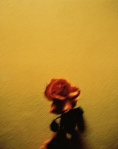 赤いバラの写真素材 [FYI03206498]