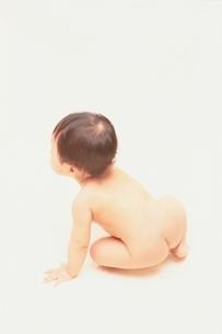 日本人の赤ちゃんの後姿の写真素材 [FYI03206507]