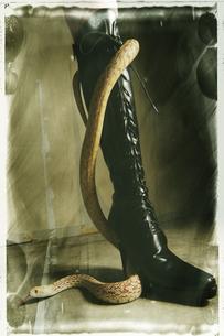 SM 黒いブーツとへびの写真素材 [FYI03206521]