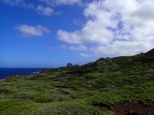 マウイの海辺の緑の写真素材 [FYI03207025]