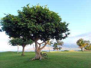 ビーチの朝の木陰の写真素材 [FYI03207072]