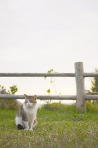 公園の猫の写真素材 [FYI03207152]