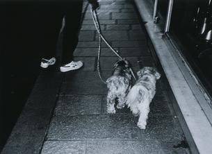 犬の散歩 B/Wの写真素材 [FYI03207189]