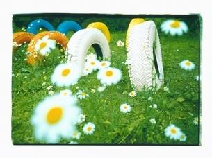 栗駒高原近くの花咲く野原とタイヤ 7月 宮城県の写真素材 [FYI03207239]