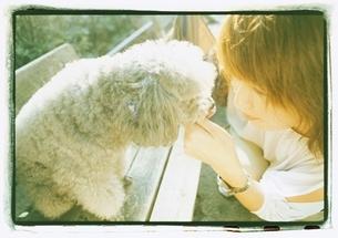 プードルと向き合う日本人女性の写真素材 [FYI03207242]