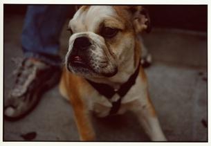 犬の写真素材 [FYI03207267]