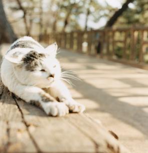 日向ぼっこ中の猫の写真素材 [FYI03207496]