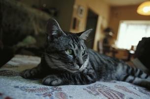 ネコの写真素材 [FYI03207761]