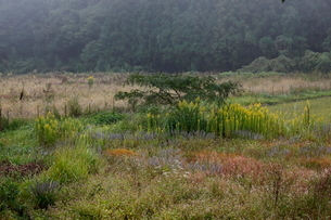 耕作放棄地に生える草の写真素材 [FYI03207806]