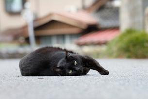 黒いネコの写真素材 [FYI03207874]