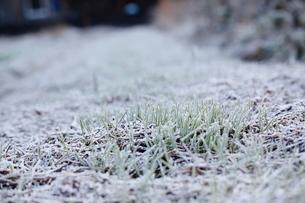麦と朝霜の写真素材 [FYI03207894]