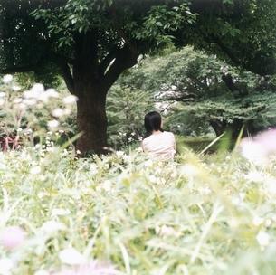 野原の女性の後姿の写真素材 [FYI03207929]