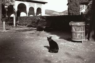 建造物のファサードの前の猫 B/W アルハンブラ スペインの写真素材 [FYI03207978]