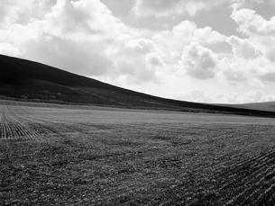なだらかに広がる丘の写真素材 [FYI03208007]