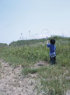 草むらで昆虫採集をする日本人の男の子の後姿の写真素材 [FYI03208625]